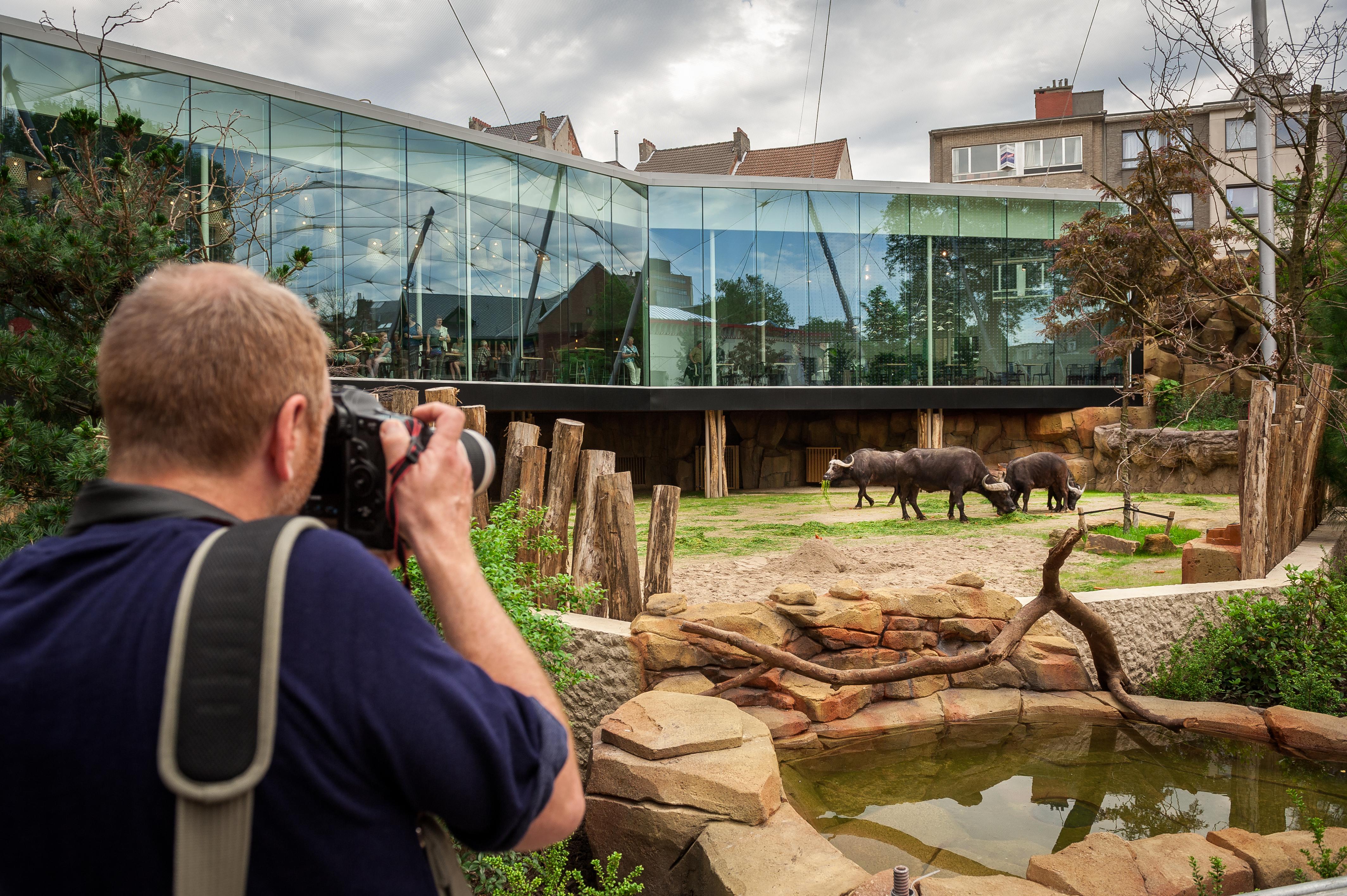 De Savanne Is Superupgrade Voor De Zoo Van Antwerpen Ben Weyts