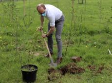 Ben Weyts plant (Gordel)bomen