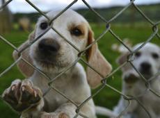 Dierenartsen krijgen eigen meldpunt voor dierenmishandeling