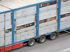 Dierenvervoer