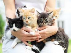 Nieuwgeboren katjes