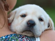 zieke puppy / hond