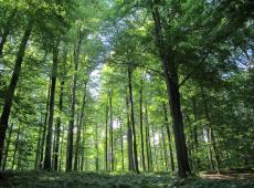 zoniënwoud