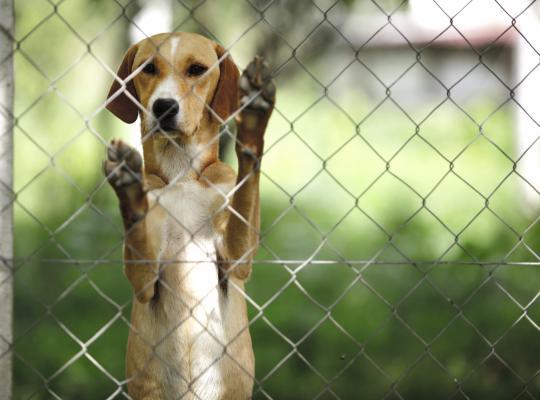 Voor het eerst financiële steun aan dierenasielen