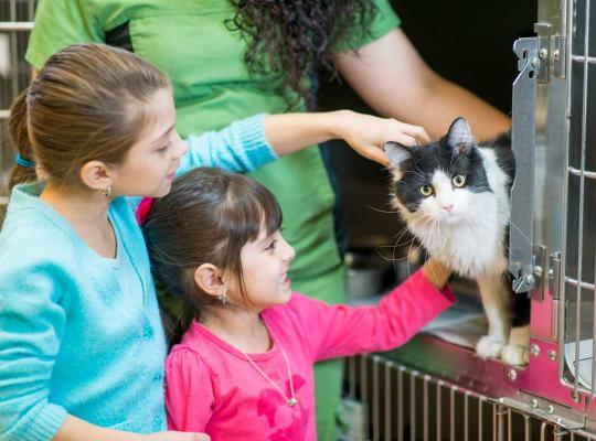 Gezien apoteerrt kat in dierenasiel