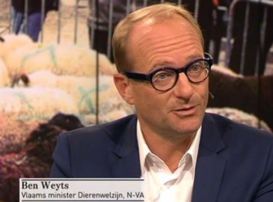 """Ben Weyts in Terzake: """"Geloofsgemeenschappen hebben er alle baat bij om mee dierenleed te verminderen"""""""