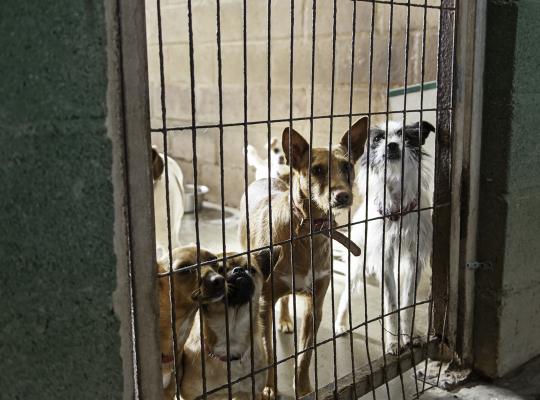 dieren asiel
