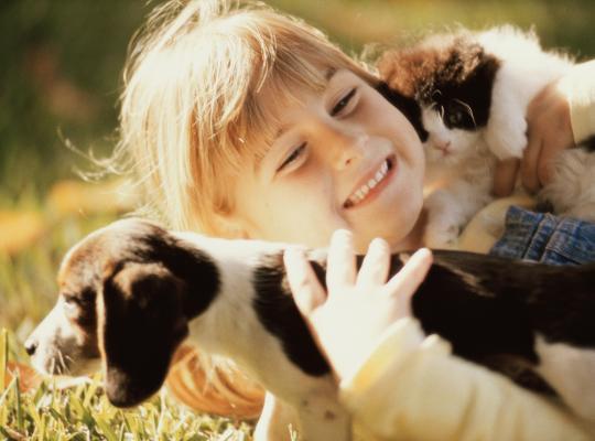 Minister Weyts pleit voor strengst mogelijke importregel voor jonge pups