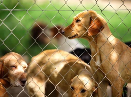 Hondenkwekerij