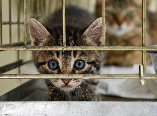 Kat in dierenasiel