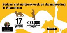 Infografiek - Gedaan met nertsenkweek en gwangvoeding in Vlaanderen
